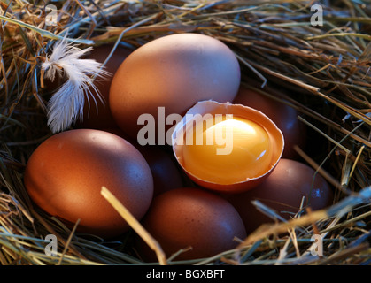 Chicken eggs in the straw with half a broken egg in the morning light. - Stock Photo