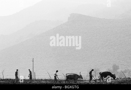 Ploughing the fields and sowing seeds, Hani Hot, northern Albania, 1992. - Stock Photo