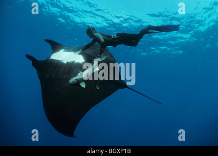 Giant Manta Ray (Manta birostris) and free diver. - Stock Photo