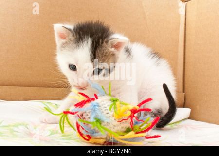 A Calico kitten playing with a ball - Stock Photo