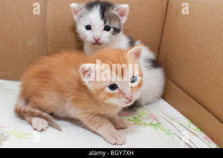 Two kittens in their birthing box - Stock Photo