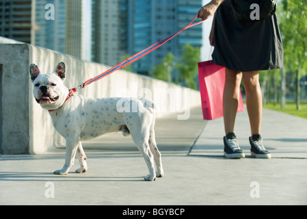 Dog on walk with owner - Stock Photo