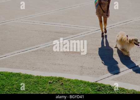 Woman walking dog in park, cropped - Stock Photo
