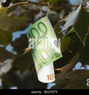 European currency growing on tree - Stock Photo
