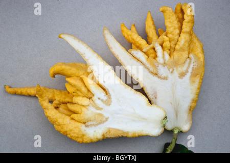 Buddha's Hand, edible fruit. - Stock Photo