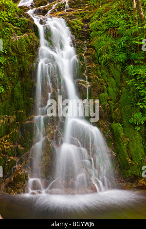 Waterfall in the rainforest near Port Alice, Northern Vancouver Island, Vancouver Island, British Columbia, Canada. - Stock Photo