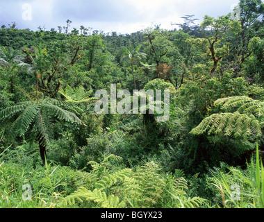 Native bush, Upolu Island, Samoa