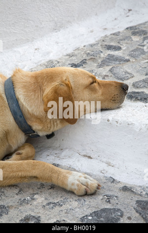 Dog sleeping on Santorini stone stairway - Stock Photo