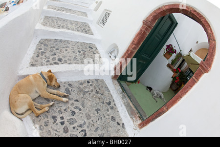 Dog sleeping outdoors on Santorini stairway and another asleep indoors - Stock Photo