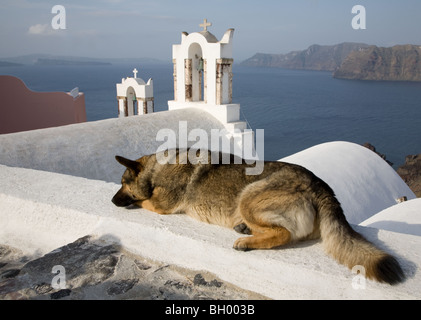 Sleeping dog on rooftop overlooking white church bell towers and Santorini lagoon - Stock Photo