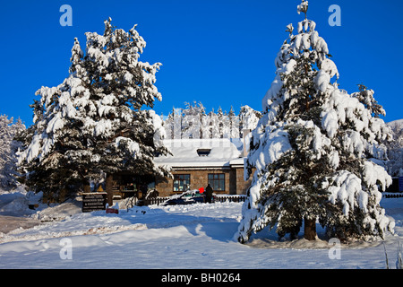 Snow covered trees and building Glenmore Reindeer Centre Scotland UK Europe - Stock Photo