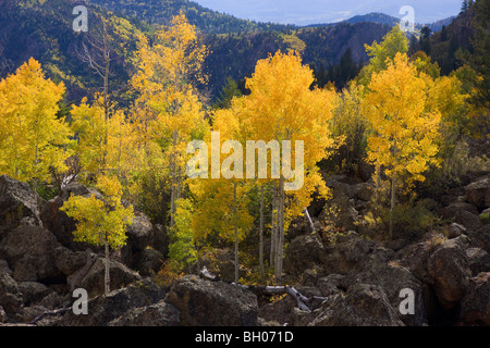 Fall colors along Highway 92, Gunnison National Forest, Colorado. - Stock Photo