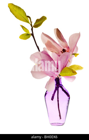 Magnolia Jane Blossoms in a vase with pink and white flowers - Stock Photo