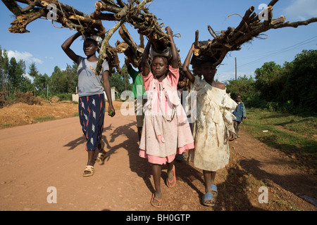 Children haul firewood out of the Kakamega Forest Reserve in Western Kenya. - Stock Photo
