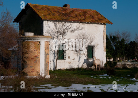 White horse standing in front of a farm house, the Camargue, Southern France - Stock Photo