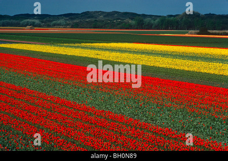 The tulip fields of Holland form amazing carpets in multi-color seen from the air. - Stock Photo