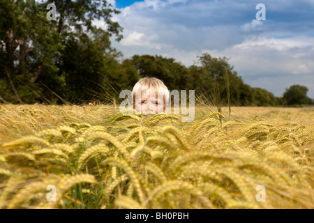 Close up of Boy in Wheat Field in Lincolnshire,England,GB - Stock Photo