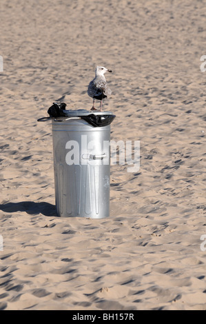 Mew (probably young Herring Gull, Larus argentatus) standing on wastebasket at Baltic Sea, Swinoujscie, Poland - Stock Photo