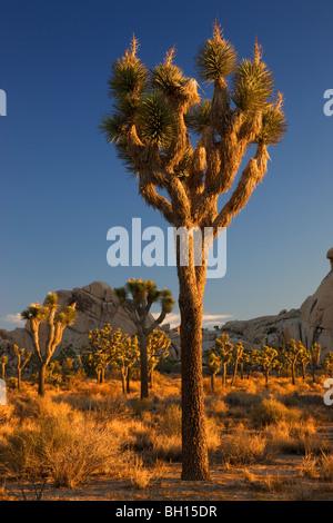 Joshua Tree National Park, California. - Stock Photo