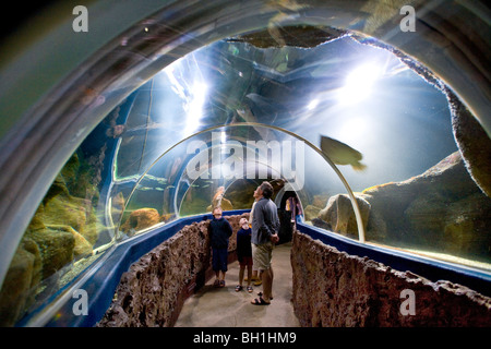 People visiting Aquarium, Westerland, Sylt Island, Schleswig-Holstein, Germany - Stock Photo