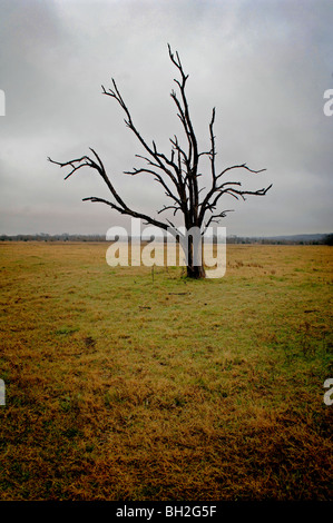 Barren trees stand out like eerie skeletons on the expanse of open grassland in the frosty winter season of death - Stock Photo
