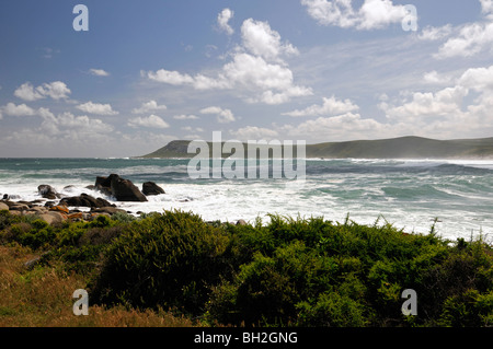 windy wind stormy day weather postberg section west coast national park wetsern cape south aftrica boulder beach - Stock Photo