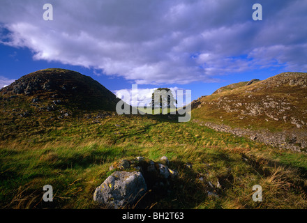 A view of Sycamore Gap near Bardon Mill on Hadrians Wall in Northumberland - Stock Photo