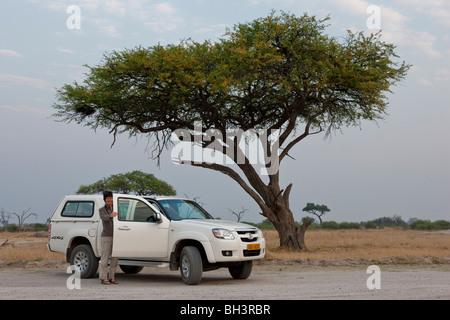 Safari vehicle parked under an acacia tree. The photo was taken in Zimbabwe's Hwange national park. - Stock Photo