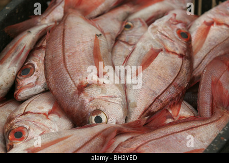 Fresh fish sold in the harbour of Namibe, formerly known as Mocamedes, the main port in Southern Angola - Stock Photo