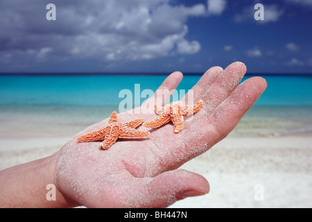 The palm of a man's hand holding two small starfish on a deserted tropical beach - Stock Photo
