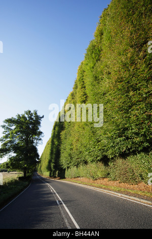 The Meikleour Beech Hedge is the highest hedge in the world. - Stock Photo
