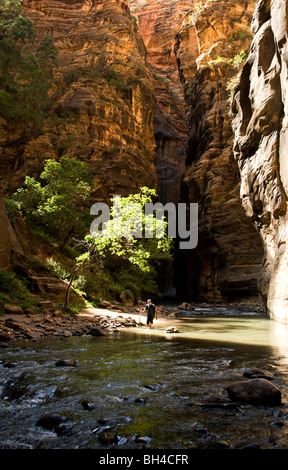 A young man walks down a river with a walking stick in Zion National Park, Utah. - Stock Photo