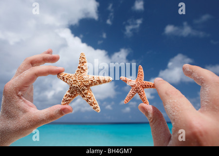A man's hands holding one large and one small starfish in the air on a tropical beach - Stock Photo