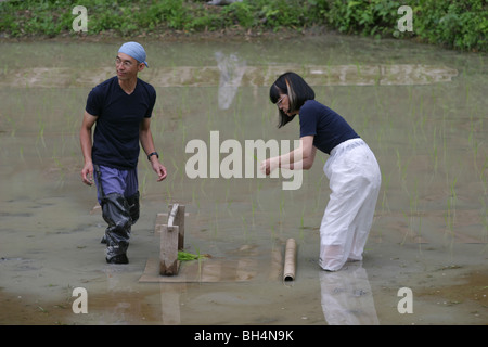 method of planting paddy Hill paddy cultivation in the mountain areas has been the major method of rice   in the most common way of transplanting a man and woman work together.