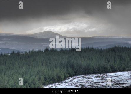 View over forest of conifers in west direction towards snowy peak of Ben Aigan. - Stock Photo