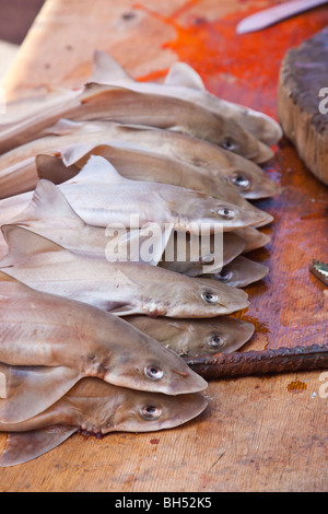 Baby sharks at a fish market in Port of Spain Trinidad - Stock Photo