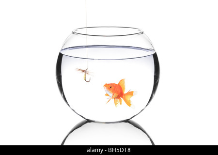 Fish bowl with a fishing hook and a fish isolated against white background - Stock Photo