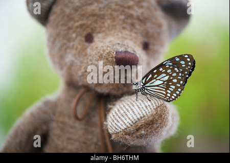 Teddy bear holding a Blue Tiger butterfly - Stock Photo