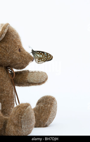 Teddy bear with a Blue Tiger butterfly on his nose against a white background - Stock Photo