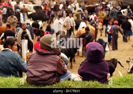 Ecuador, Otavalo, rear view of two boys sitting on a grassy area, overlooking at at the cows section of a cattle - Stock Photo