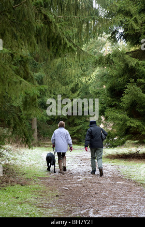 Two women taking the dog for a walk, Thetford Forest, Norfolk, UK - Stock Photo
