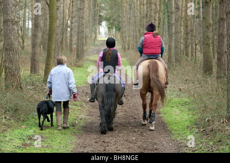 Horse riders and woman walking the dog, rear view, Thetford Forest, Norfolk, UK - Stock Photo