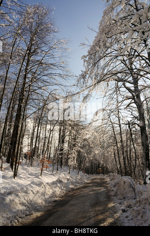 Winter scene, lonely road in a forest of Gorski kotar, Croatia - Stock Photo