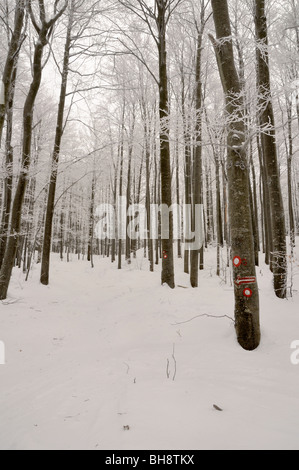 Winter in a forest of Gorski kotar, Croatia - Stock Photo