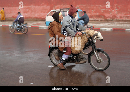Two men and a sheep ride on a motorbike around Marrakesh streets few days before the Eid al-Adha - Stock Photo