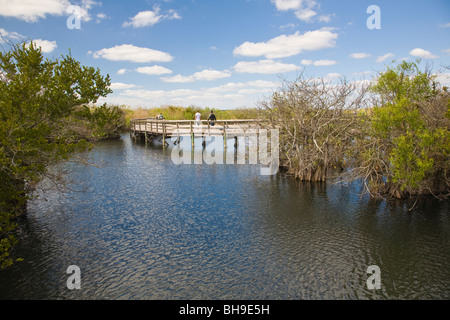 Anhinga Trail in the Everglades National Park in Florida - Stock Photo