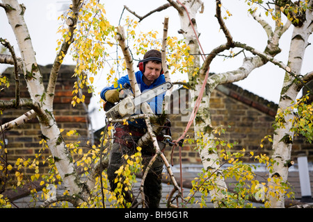 Tree surgeon trimming a tree with a chain saw. - Stock Photo