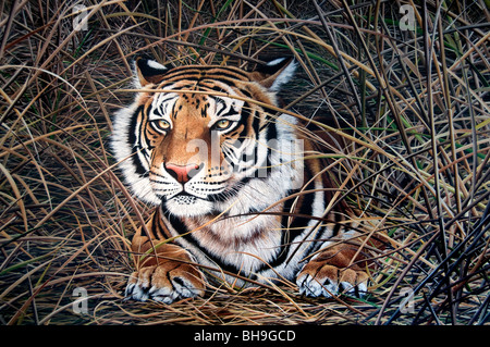 Tiger Buenos Aires San Telmo Gallery Art Painting Artist Argentina Town City - Stock Photo