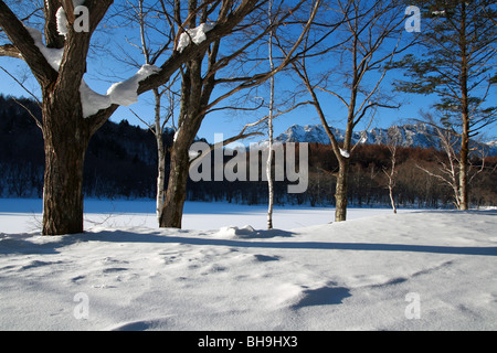 Leafless Birch trees covered in snow with mountain background and frozen winter lake in Japan with Togakushi mountain - Stock Photo