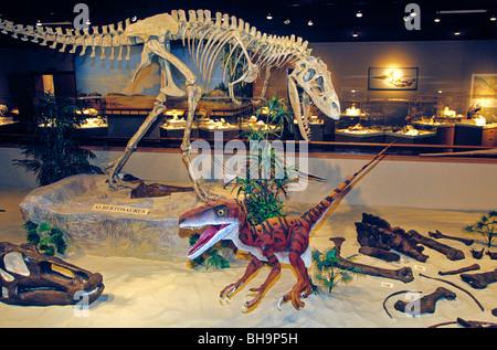 Exhibit of Dinosaurs at Dakota Dinosaur Museum in Dickinson, North Dakota, USA - Stock Photo